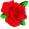 rose-clipart-60x60